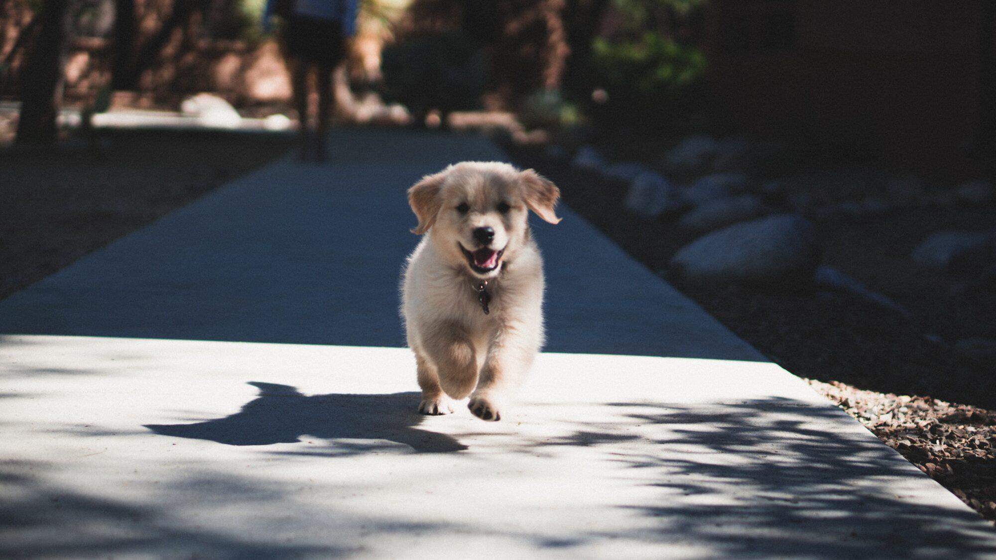 Ønsker du også kun det bedste af det bedste for din hund?